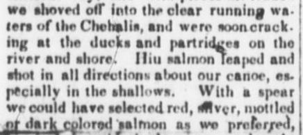 hiu salmon