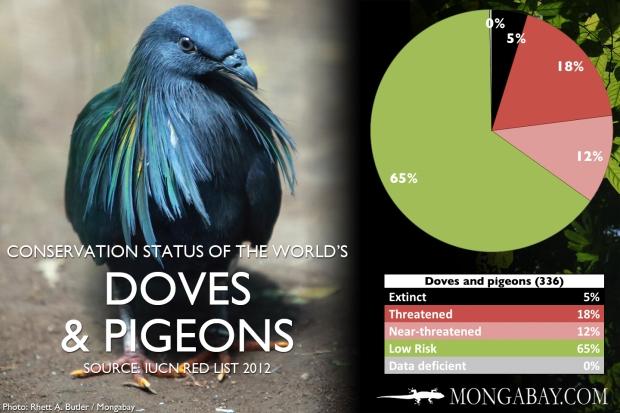 endangered pigeons.jpg