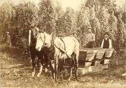 hop pickers puyallup valley 1889