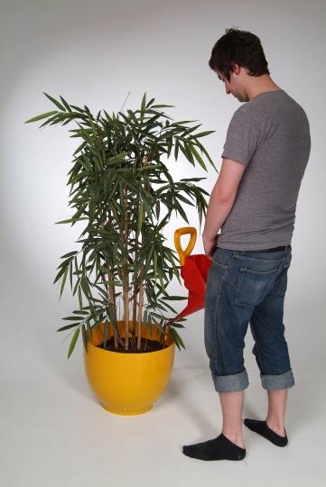 piss plant