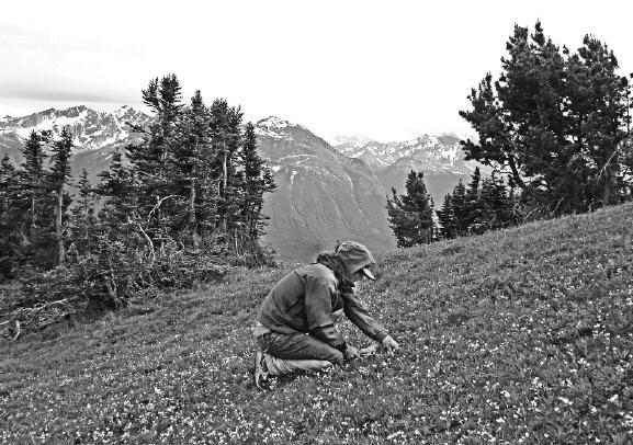digging for mountain potatoes