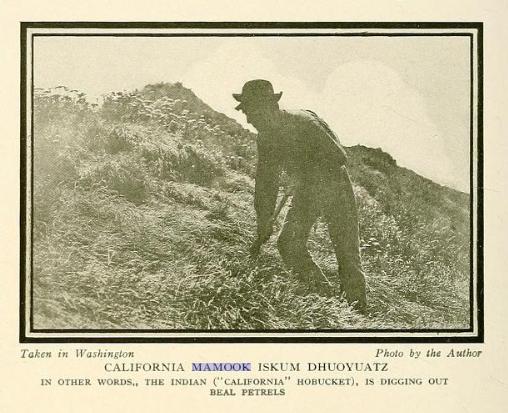 california mamook iskum dhoyuatz.PNG