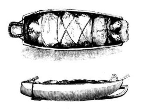 belcher chenooks illustratino