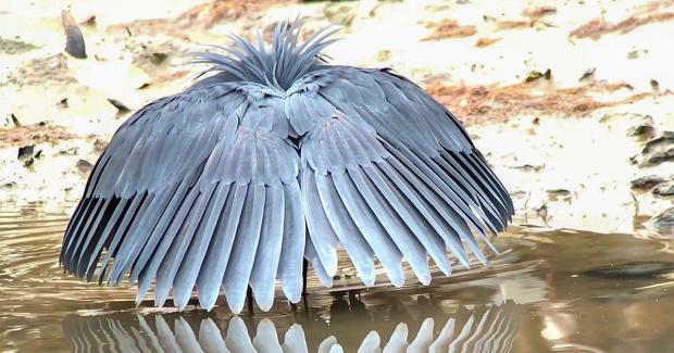 bird fooling