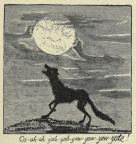 ramble coyote