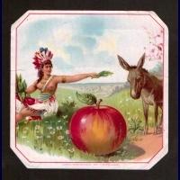 indian apple ass