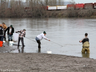 cowlitz_river_smelting_02-06-16_C_med