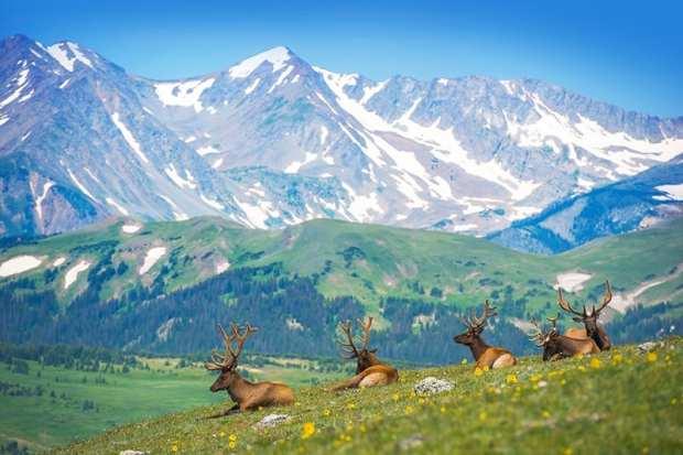 elk-colorado-rocky-mountains-
