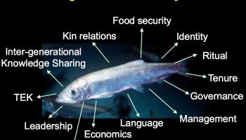 lepofsky-herring-slide